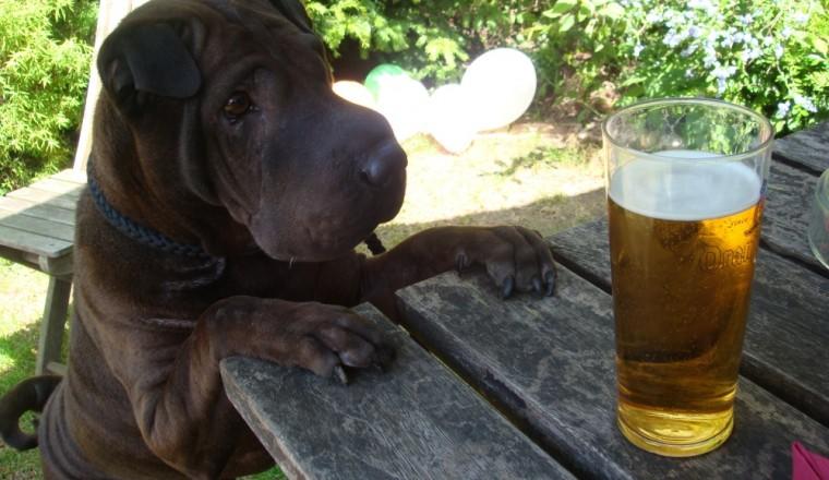 Ingen liker en ølsnobb
