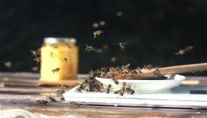 Det er ikke bare vepsen som er glad i honning. Lervig og Nørrebro Bryghus skal snart brygge en braggot sammen.
